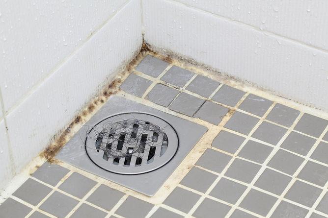 household mold prevention bathroom mold