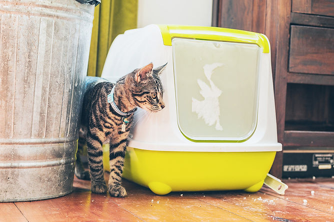 Eliminate Bad Smells In Your Home Cat And Litter Box