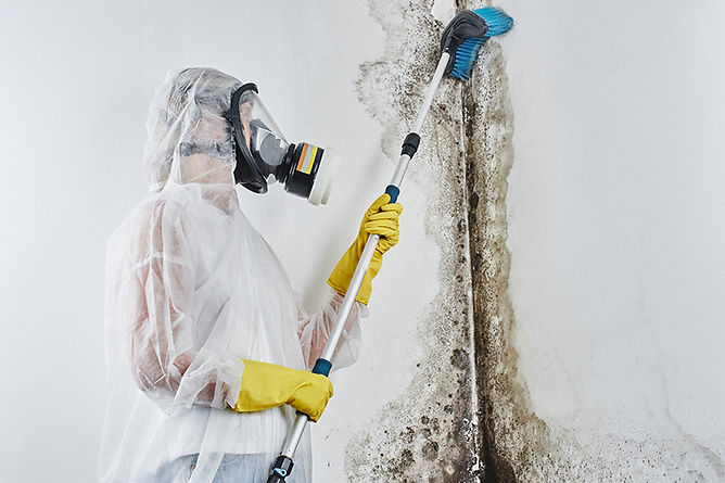 If You Have Mold In Your Home Professional Mold Removal,household mold, professional mold removal, DIY mold removal, mold cleanup, mold remediation