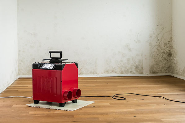 Best Mold Removal 3
