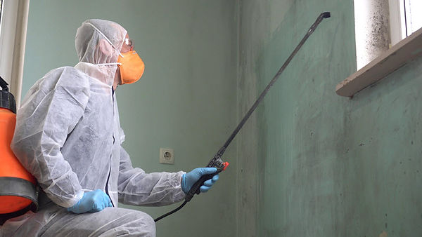 Mold Removal Service 3