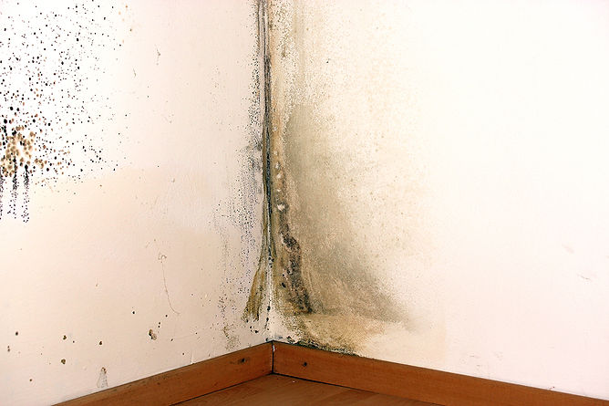 Common Home Problems Mold In Corner
