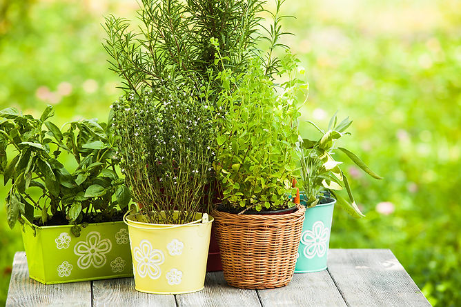 Keep Your Patio Bug Free Potted Herbs