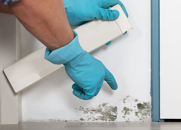 household mold prevention