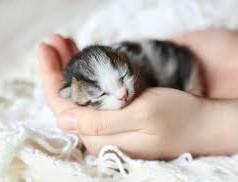 kitten in hands.jpg