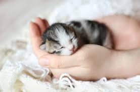 kitten in hands.jpg