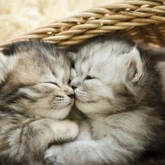petmd-kitten-facts.webp