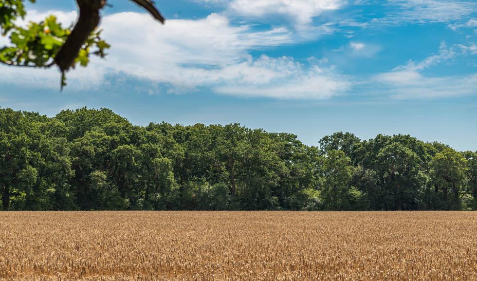 Landscape of New Forest UK