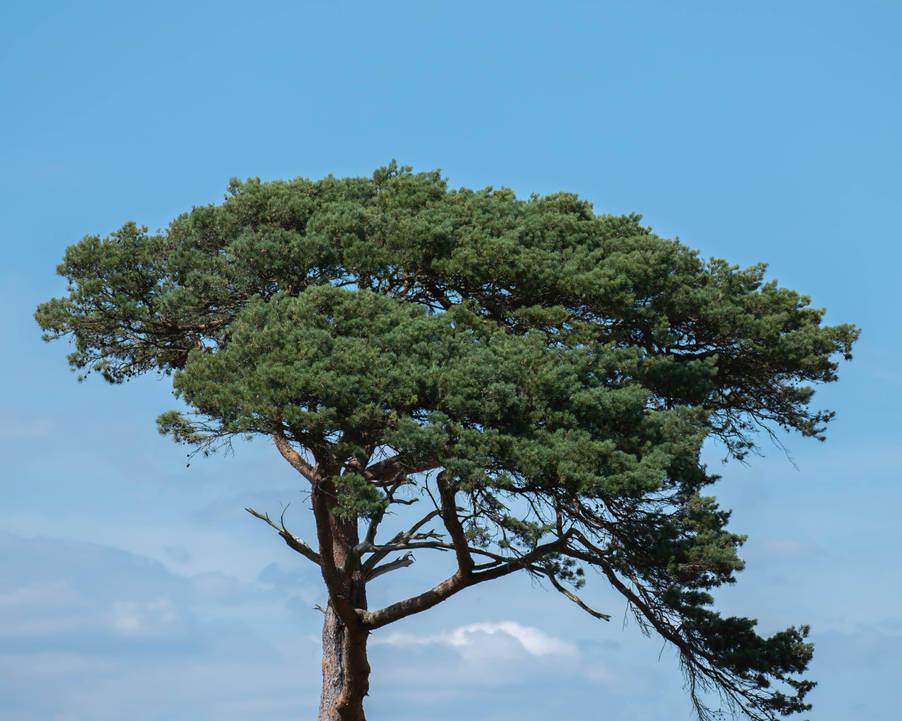 Tree Top of Heaven