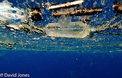 David-Jones-plastic-bottle-image.jpg