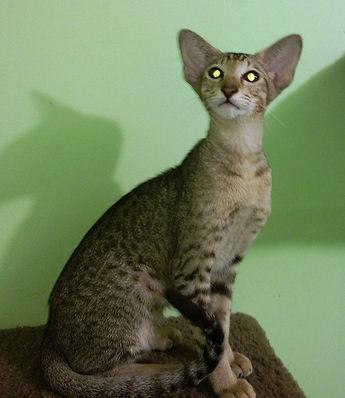 Aliencat George