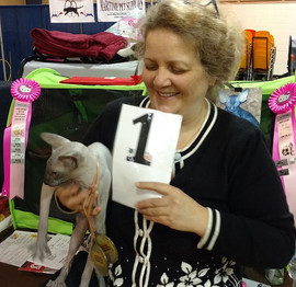 Blue Sky got 1 place at cat show ALL Bre