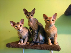 Aliencat Peterbalds are in their family home