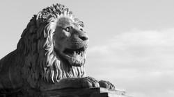 Lion of Budapest