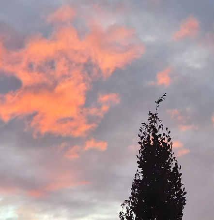 tree and clouds.jpg