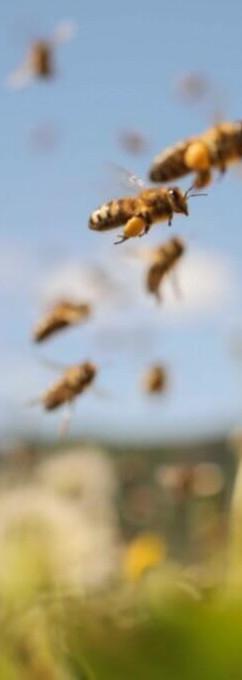 Honey_Bees-1024x683_edited.jpg
