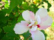 hgflower.jpg