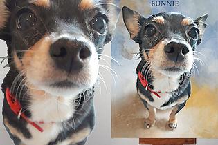 Pet portrait review