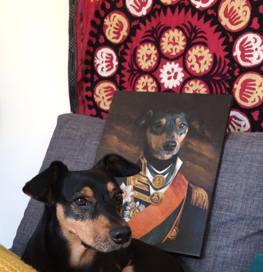 admiral_dog_portrait