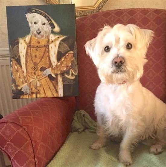 ernie_royal dog portrait