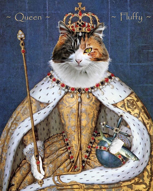 Cat in royal costume