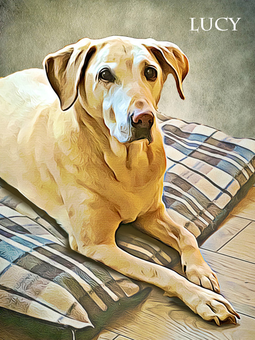 2bfc539b01d4 ... your pets distinctive features to create a stunning bespoke  personalised pet portrait on high quality canvas wrapped onto a solid pine  wood frame.