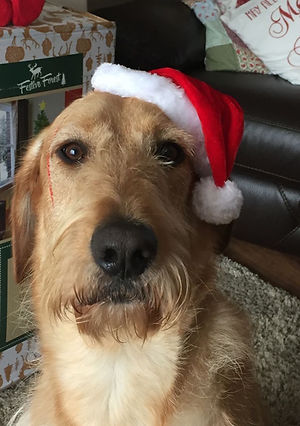 Dog in Christmas hat