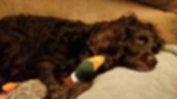 Sister-Girl dreaming of duck hunting