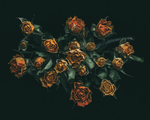 """""""The Rebirth of Flowers"""""""