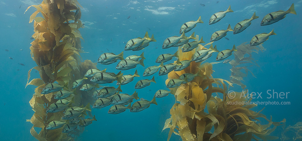 Alex Sher   JM Art Management   Protect the Ocean
