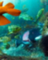 Protect the Ocean | Alex Sher | JM Art Management
