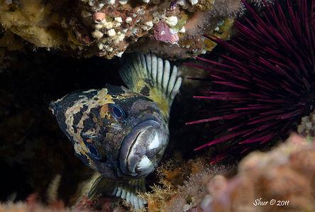 Rockfish - Anacapa Island, CA