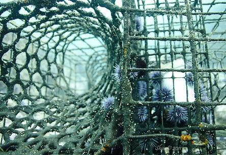 Lobstertrap - Anacapa Island, CA
