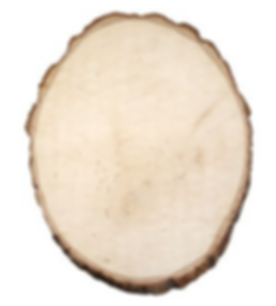 basswood round.PNG