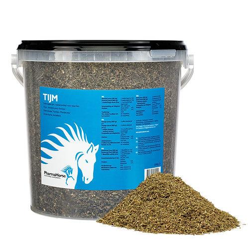 Thyme - קורנית לסוס