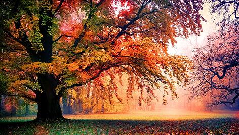88-884879_3840x2160-colorful-autumn-tree