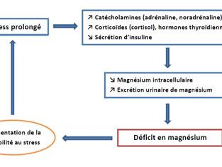 Le magnésium