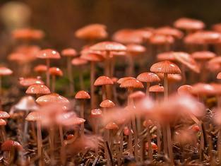 Les champignons, un atout santé