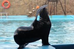 дельфинарий8