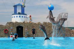 дельфинарий4