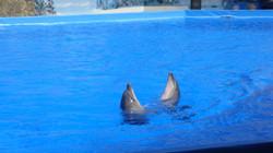 дельфинарий 1