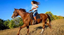 конные прогулки2