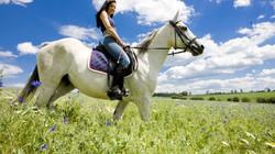 конные прогулки1
