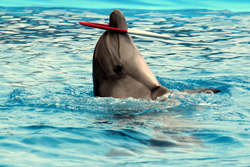 дельфинарий5