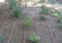 Drip Irrigaiton in landscape bed