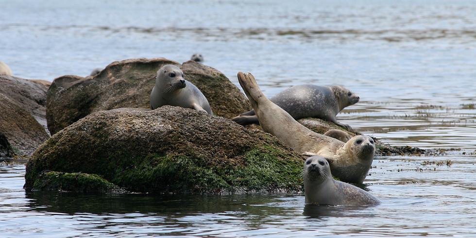 Seal Watch/Seal Population Study Teacher Workshop & Cruise