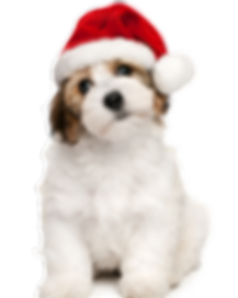FCHS Christmas-dog.png