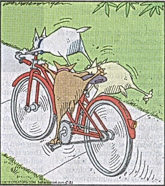 Dogs riding a bicycle