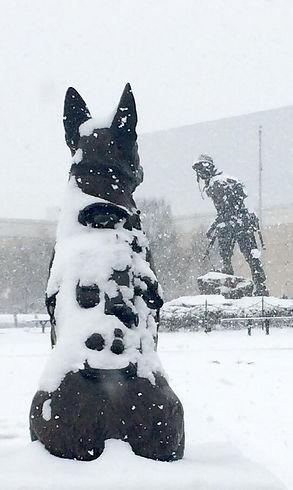 SOF K9 Snow.jpeg