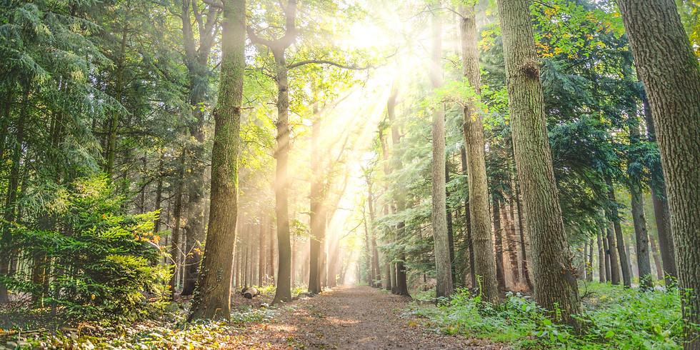 Lighten Your Path to Prosperity in 2021